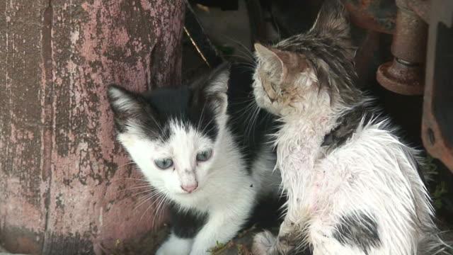 Feral kittens encontrar sombra bajo el sol - vídeo