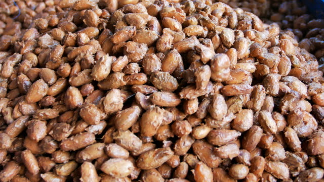 fermented and fresh cocoa-beans lying in the wooden box - fermentare video stock e b–roll