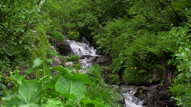 fern and mountain stream