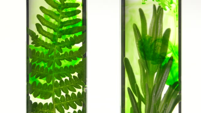 fern and rosemary in test tubes