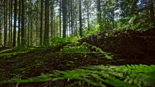 fern and trees in forest - danimarca video stock e b–roll