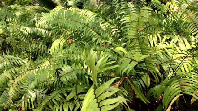 fern bushes - cespuglio tropicale video stock e b–roll