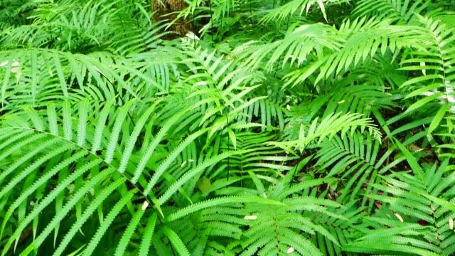 fern field in rain forest