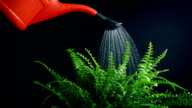 istock Fern Is Watered By Hand 2 Shots 1218419134