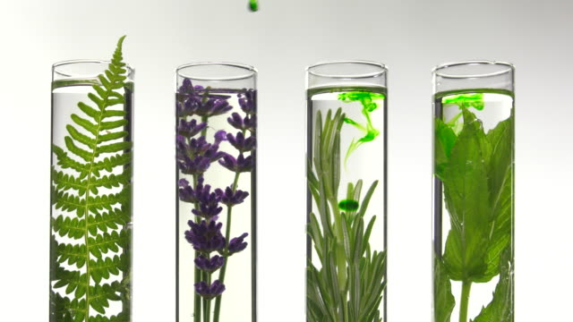 fern, lavender and mint in test tubes