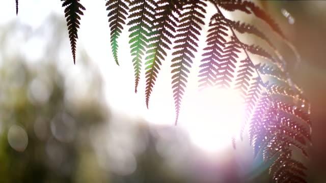 foglia di felce - farfalla ramo video stock e b–roll