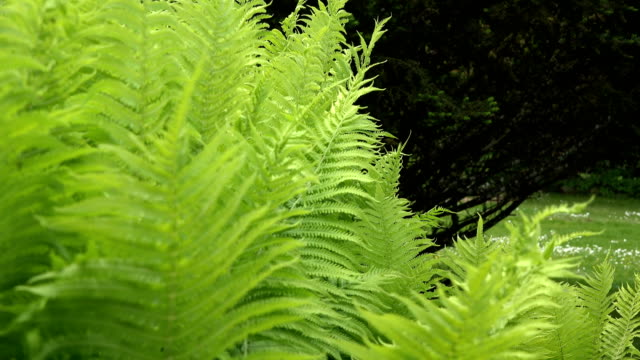 fern plant leaves move in wind in park. 4K