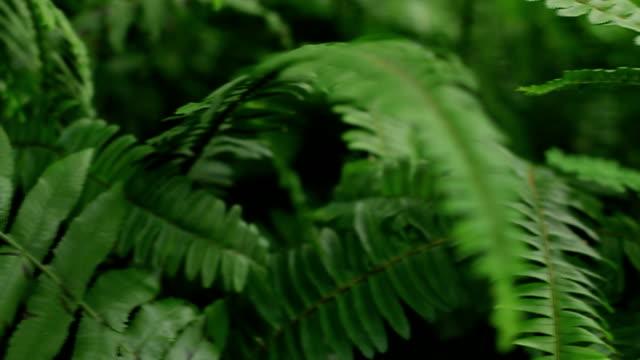 Fern : Rainforest video
