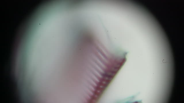 fern stem l.s.under light microscopy - клубень стоковые видео и кадры b-roll