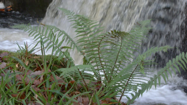 Fern swaying in the wind in rural Dumfries and Galloway south west Scotland