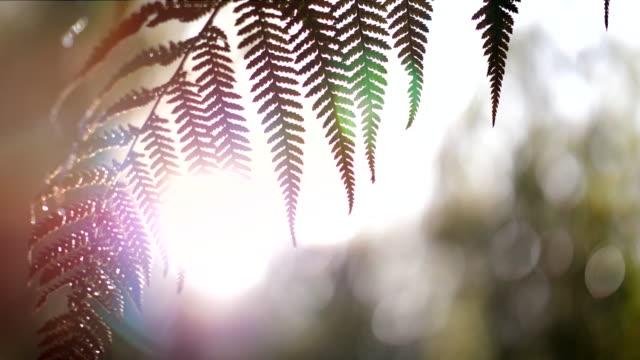 vídeos y material grabado en eventos de stock de hoja de helechos - nueva zelanda