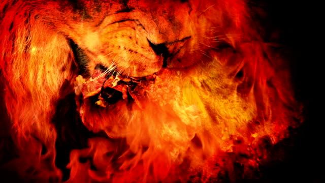 vahşi aslan et yangın soyut yer. - kaplan stok videoları ve detay görüntü çekimi