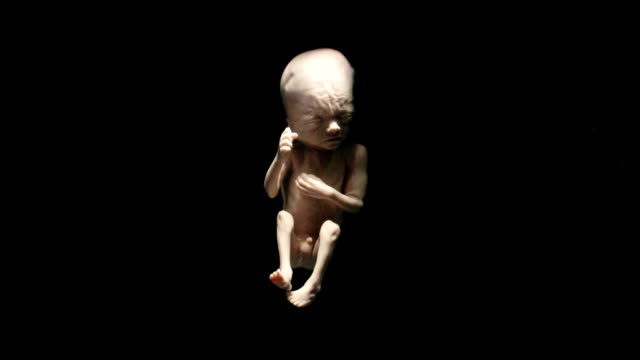 fetus in womb - 20 24 anni video stock e b–roll