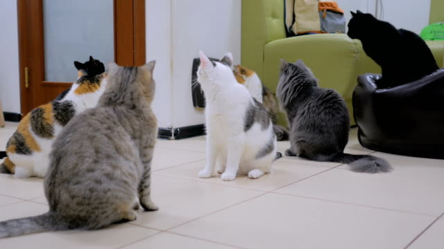 Few cats waiting meal time Few cats waiting meal time together at modern cat cafe group of animals stock videos & royalty-free footage