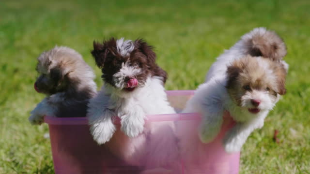 A few cool little puppies in a pink basin A few cool little puppies in a pink basin. 4k video puppy stock videos & royalty-free footage