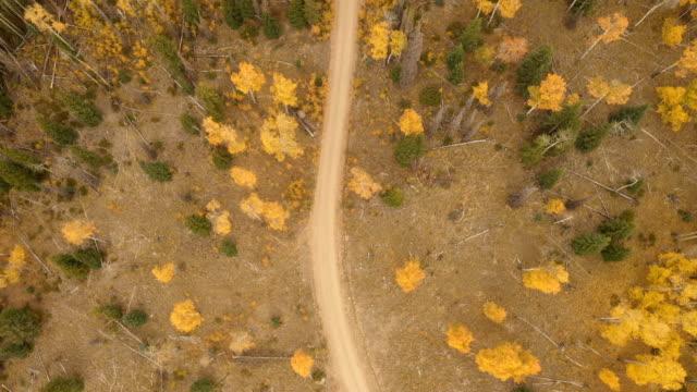 vídeos de stock, filmes e b-roll de poucos aspens solitários depois da estrada de terra na floresta - condado de pitkin