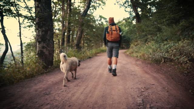några fler steg för mig och min hund - hund skog bildbanksvideor och videomaterial från bakom kulisserna