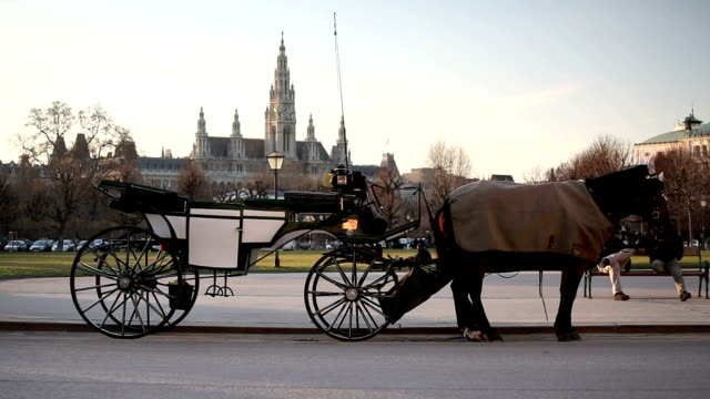 carrozza fiaker a vienna, austria - cocchio video stock e b–roll