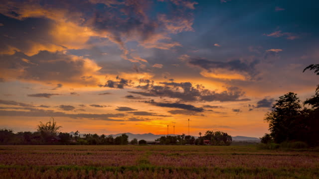 Field agriculture and Rice field sunset 4K Time lapse.