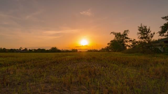 feld und sunrise zeitraffer - sonnenaufgang stock-videos und b-roll-filmmaterial