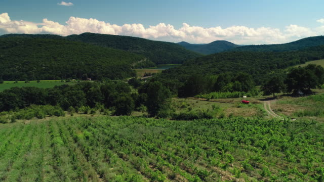Field and vineyard rows in beautiful valley, Bulgaria, Europe, aerial drone view