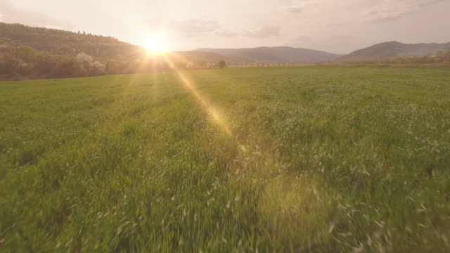 Field at sunset video