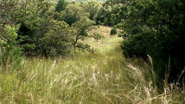 Field Breeze video