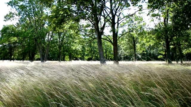 fält gröda fält vajande men vinden - välstånd bildbanksvideor och videomaterial från bakom kulisserna