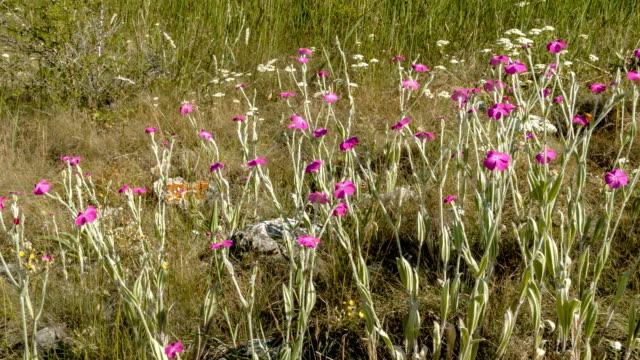 Field flowers background video