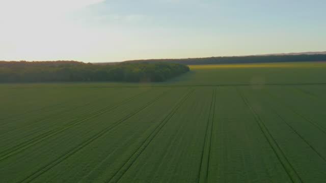 vídeos de stock e filmes b-roll de vista aérea de um campo de trigo verde - multicóptero