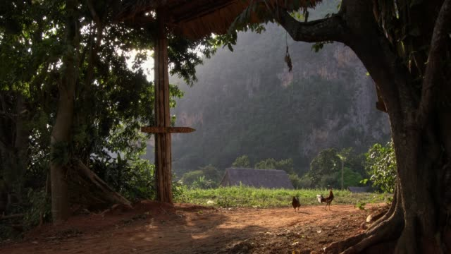field of coffee and tobacco plantation in vinales valley cuba - nicotina video stock e b–roll