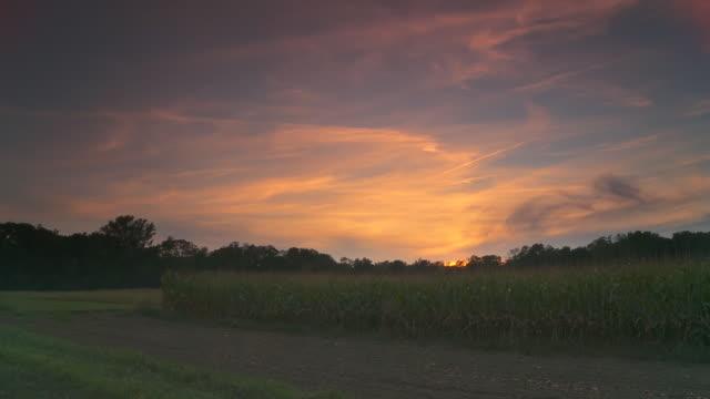 stockvideo's en b-roll-footage met hd time lapse: field of corn at sunset - minder dan 10 seconden