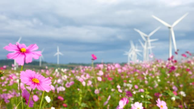 Field of cosmos flowers with wind turbines in the background.