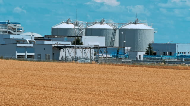 黄金の熟した小麦のフィールドです。収穫の季節 - 木目点の映像素材/bロール