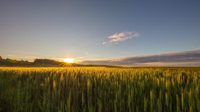 t/l fältet grön vete vid soluppgången - maj bildbanksvideor och videomaterial från bakom kulisserna