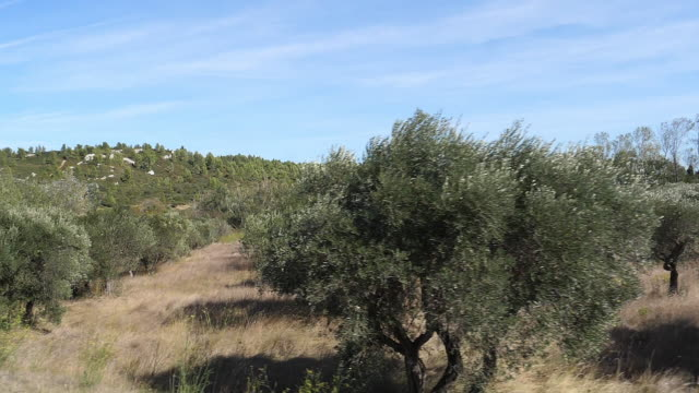 field of Olive's Trees near Maussane Les Alpilles in the South East of France, slow motion field of Olive's Trees near Maussane Les Alpilles in the South East of France, slow motion provence alpes cote d'azur stock videos & royalty-free footage