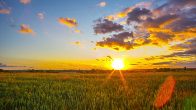 Field of wheat and sunset, panoramic time-lapse