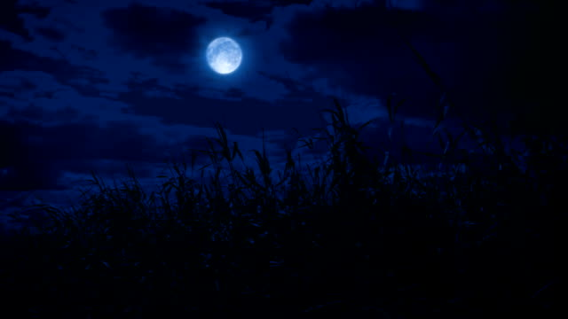 Video Field Of Wild Grass At Night With Moon Above