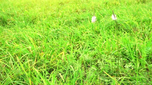 Field with flowers on a wind. Beautiful blue wild flowers video