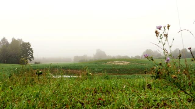 feld mit see mit nebel bedeckt - lupine stock-videos und b-roll-filmmaterial