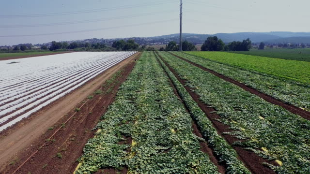 Field with rows of green plants and small greenhouses video