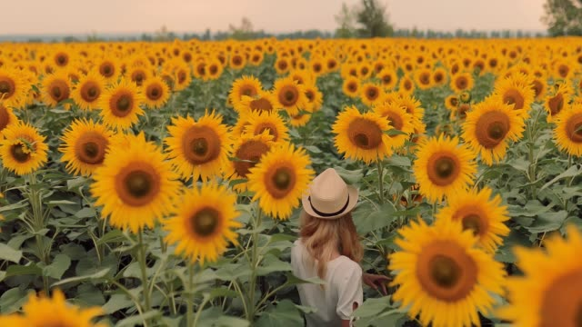 field with tall bright yellow sunflowers. beautiful woman in a hat walks across the field and smiles. view from above. - sunflower filmów i materiałów b-roll