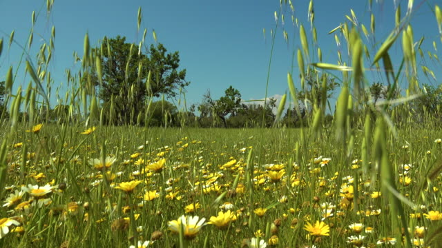 Field with wild flowers video