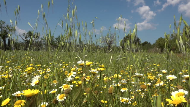 Field with wildflowers video