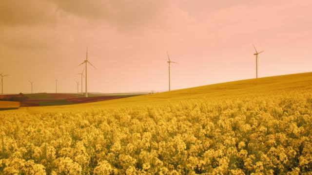 ds fält av blommande raps omgiven av vindkraftverk - generator bildbanksvideor och videomaterial från bakom kulisserna