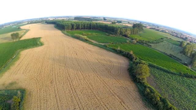 Fields video