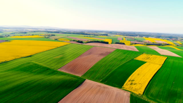 Fields with various types of agriculture 4K video