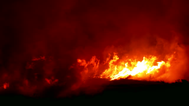fierce bush fires endanger ( close up) - furioso video stock e b–roll