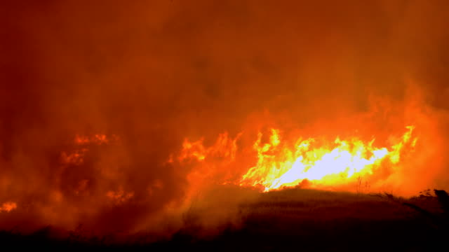 stockvideo's en b-roll-footage met felle bosbranden in gevaar brengen (close-up) - bosbrand