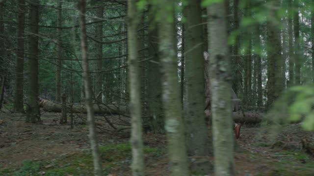 vídeos y material grabado en eventos de stock de combatiente sosteniendo un escudo y corriendo - árboles genealógicos